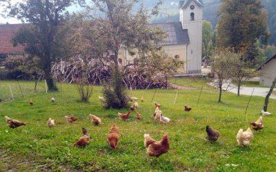Ekološka kmetija Pr´Jemcu, Davča, Železniki