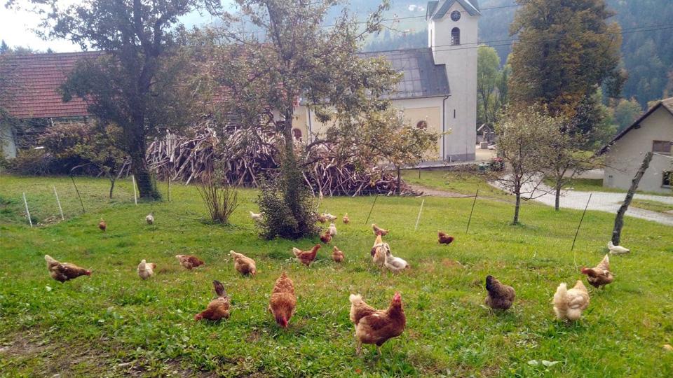 ekološka kmetija pr jemcu